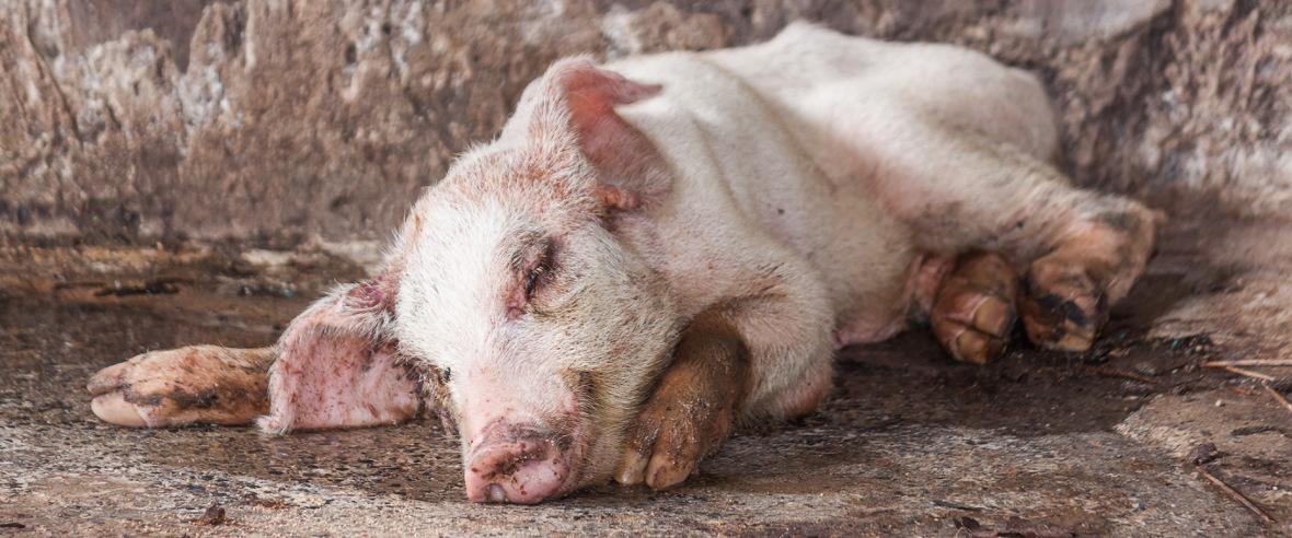 The Licensed Animal Slaughterers' & Salvage Association : LASSA : Slider3